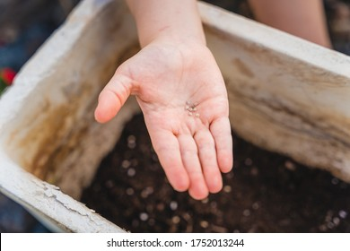 close up of a child hand holding few seeds with background blur of white clay pot, garden plants in backyard
