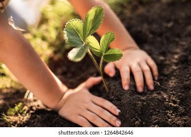 Close up of child hands touching ground around fresh green sprig