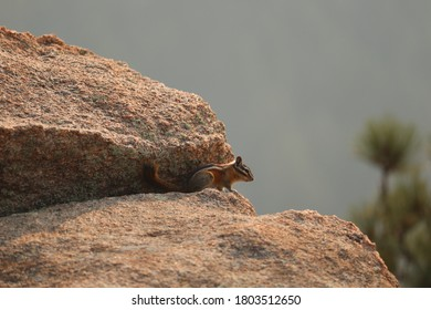 Close up of a Chipmunk on a granite rock