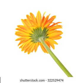 close up chrysanthemum flowers for background, blur