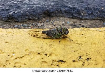close up of cicada on asphalt