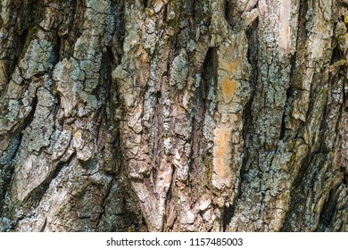 Close up of coarse rough tree bark covered with moss. Abstract natural texture background