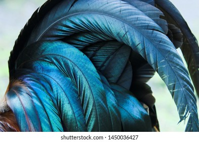 Close up of a cockerel/rooster's cascading tail feathers.