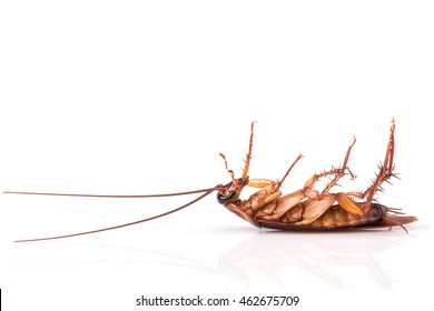 Close up cockroach isolated on a white background