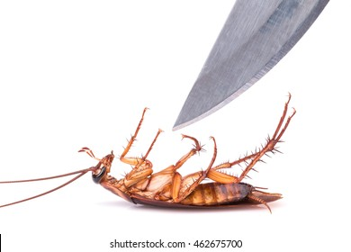 Close up cockroach and knife isolated on a white background : Killing cockroach concept