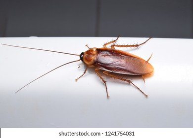 Close up cockroach in toilet