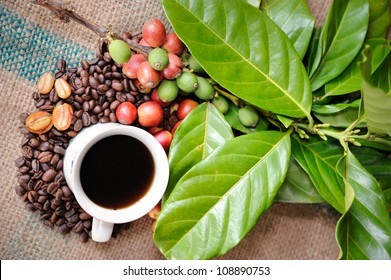 Close up of coffee cup and fresh raw coffee beans with leaf on texture background, selective focus.