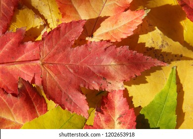 Close up of colerful leaves in autumn