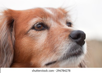 close up of collie type dog's face chin raised realistic color