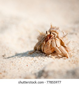 Close up color picture of hermit crab crawling through sandy beach, Krabi , Thailand