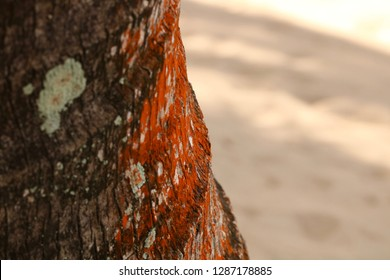 Close up of Colored Palm Tree Trunk Bark in Hopkins, Belize