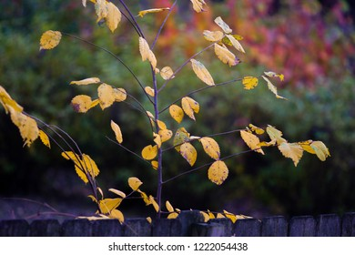 Close up of colorful autumn leaves