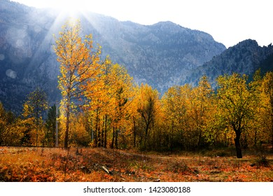 close up colorful autumn leaves on trees and beam of light in forest of Mersin, Turkey
