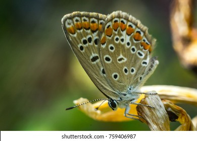 Close up of a colorful butterfly