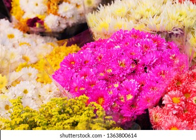 close up of colorful chrysanthemum flower in flower shop.