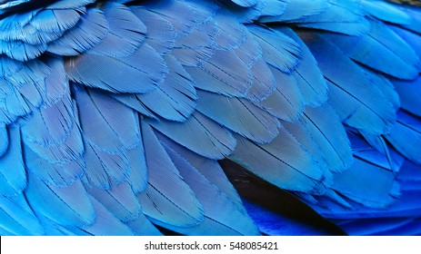 Close up of colorful feathers, Abstract blue texture background
