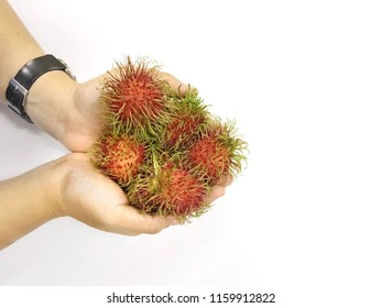 Close up of colorful fresh ripe rambutan (Nephelium lappaceum) on hands with white background ,is sweet delicious edible tropical fruit. It is a popular garden fruit tree in thailand sold fresh.