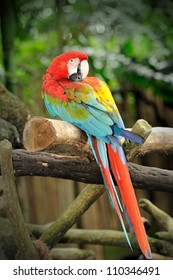 Close up of colorful macaws, selective focus.