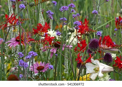 A close up of a colourful flower border with crocosmia, verbena and echinacea in a flower meadow