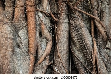 Close up complexity of tree roots