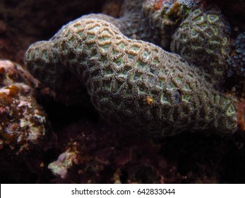 A close up of coral polyps growing in a colony.