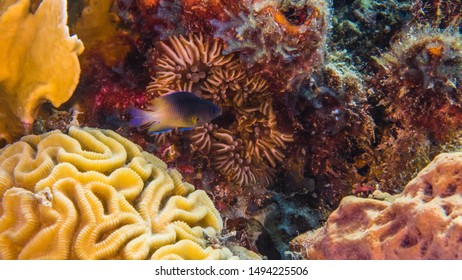 Close up in coral reef of the Caribbean Sea around Curacao