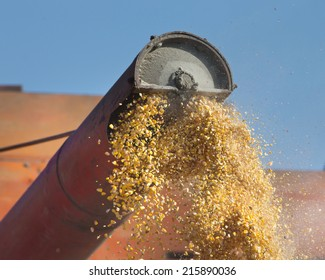 Close up of corn harvesting by combine harvester