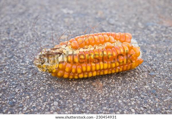 Close up corn on the street