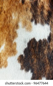close up of cowhide dapple background