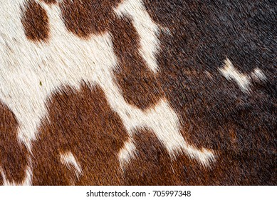 Close up of cowhide rug with white, brown and black spots and dark fur texture.