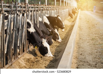 close up of cows in a farm with sunlight