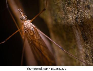 A close up of a crane fly