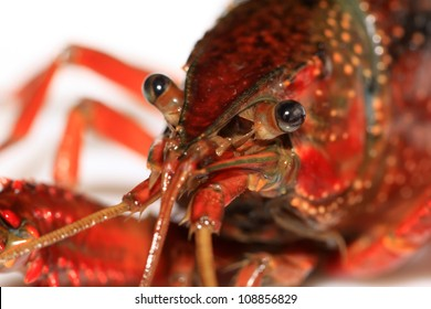 close up of crayfish on a white background.