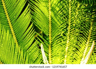 Close up creative tropical green palm leaves. Nature green background. Flat lay. - Shutterstock ID 1219741657