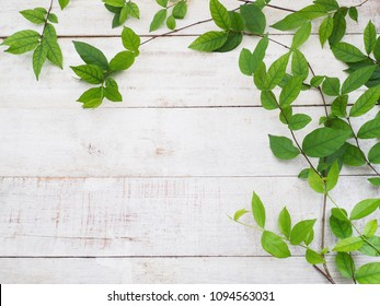 Close up creeper plant green leaves on white vintage wood. Summer or spring background. Flat lay.