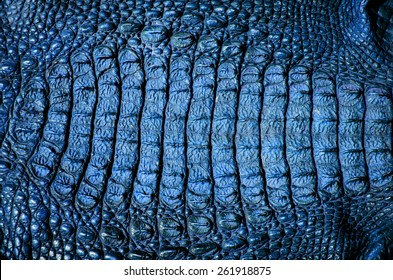 close up crocodile leather texture background in blue