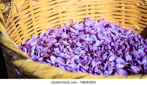 Close up of crocus flowers in a wicker basket at harvest time