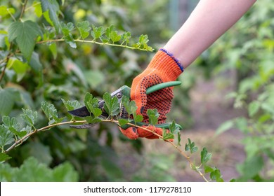 Close up cropped photo of woman hand in orange gloves hold garden secateurs with blade, shears and green plastic handle used for cutting tree branches