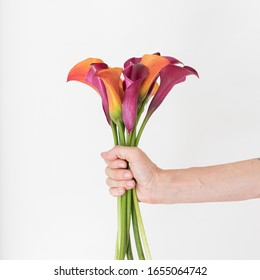Close up cropped view of hand holding red and orange calla lilies (selective focus)