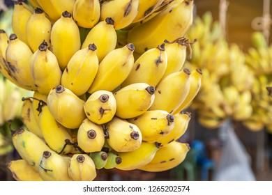 "Close up cultivated bananas or Pisang Awak Bananas or  Kluai  Namwa (Musa sapientum Linn) (Musa ABB CV.Kluai ""Namwa"")"