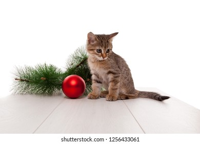 Close up of curious kitten playing with new year ball