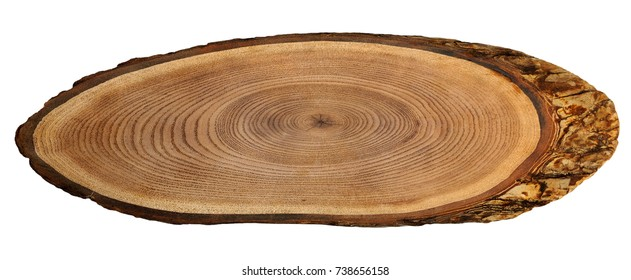 A close up of the cut of a ash tree. ( Fraxinus mandshurica )