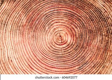 A close up of the cut of a cedar tree