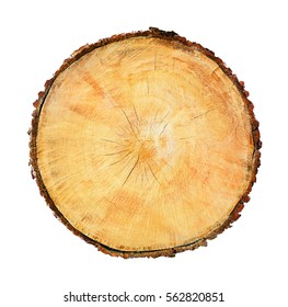 Close up of cut end of large tree stump isolated on white. Large section of wood with grain and texture.