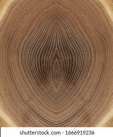 A close up of the cut rings texture of cork tree
