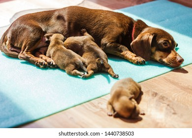 Feeding Mother Dog Images, Stock Photos & Vectors | Shutterstock