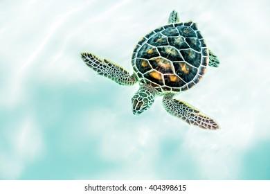 Baby Turtle Images Stock Photos Vectors Shutterstock