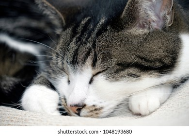 Close up of a cute cat relaxing