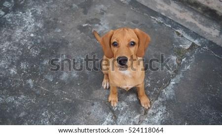 Close Cute Golden Retriever Puppy Happy Stock Photo Edit Now