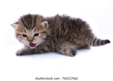 Close up of cute kitten on white background isolated.